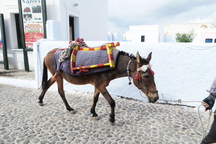 13.-donkey