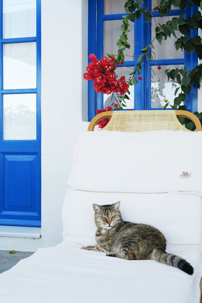 39.-cat-visitor-santorini