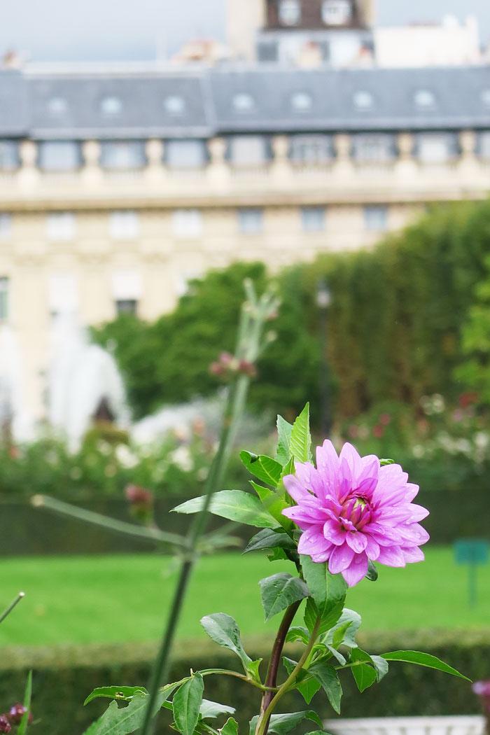 Palais-Royal-Garden-Flower