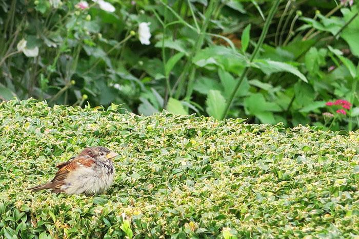 Palais-Royal-Garden-bird