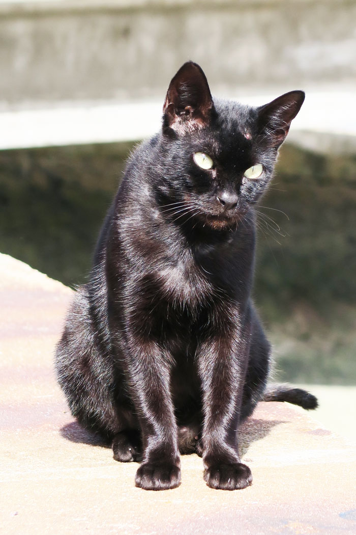 arcachon---tiny-panther
