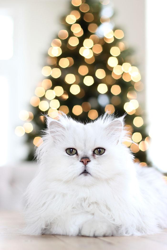 Winnie-Christmas-2013
